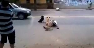 Así perros cuidan a su amo borrachito