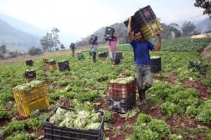 Agropecuarios venezolanos en crisis por robos, falta de gasoil e inversión
