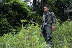 Las hectáreas sembradas de coca en Colombia se redujeron un 7 % en 2020