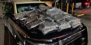 Lo atraparon por el intenso olor de las 160 libras de marihuana que ocultaba en Florida