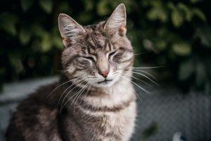 """La cola de los gatos es un """"traductor"""" de sus estados de ánimo"""