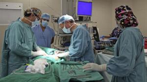 Un hombre amputado recibió un trasplante de brazos y hombros en Francia