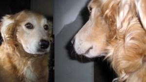 ¿Te has preguntado qué siente tu mascota cuando acaricias a otro animal? Aquí te lo explicamos