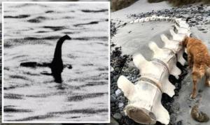¿Ha muerto el Monstruo del Lago Ness? Encuentran un esqueleto gigante en Escocia (FOTOS)