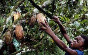 Dura lucha contra el trabajo infantil en la producción de cacao en Costa de Marfil