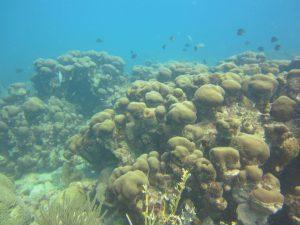 La contaminación de las costas venezolanas puede acabar con sus arrecifes