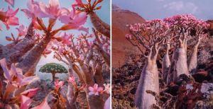 ¡Parece un cuento! FOTOS de la Isla de Socotra, uno de los sitios más aislados del mundo