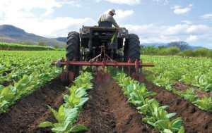 El sector agrícola de Venezuela se encuentra a merced de la improvisación y la falta de planificación
