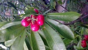 Murieron dos hermanos en Colombia tras comer un fruto venenoso en el jardín de su abuela